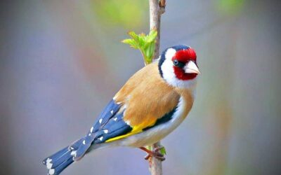 Birding blog Sample 6