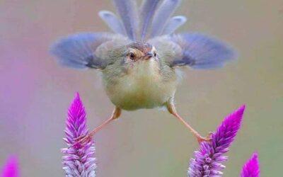 Birding blog Sample 5
