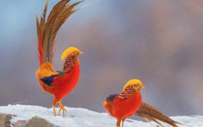 Birding blog Sample 4